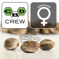 CBD Mix Féminisée