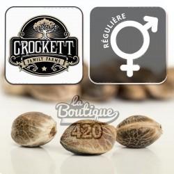 Crockett's Tangie Régulière