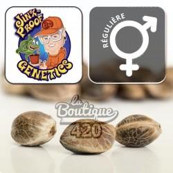 Gourmet Collection Cannabis Winners 1 Féminisée