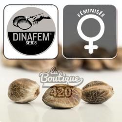 Quick Dinamed CBD Féminisée