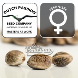 Dutch Mix Outdoor Féminisée