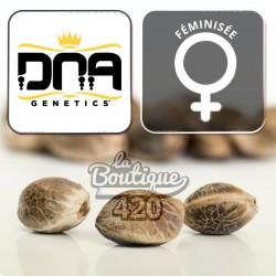 Dna Mix Pack Féminisée