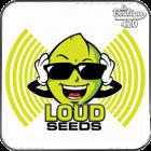 Loud Seeds