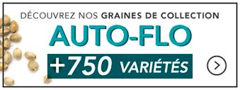 graines-autofloraisons
